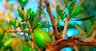 Tiznit : le projet de plantation de 400 ha d'arganiers prend vie