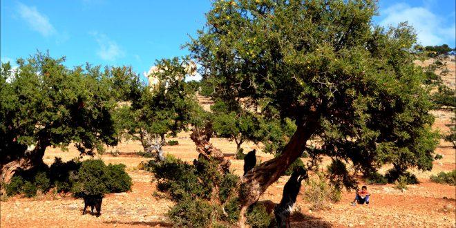 Chtouka projet de plantation de 406 ha arganiers