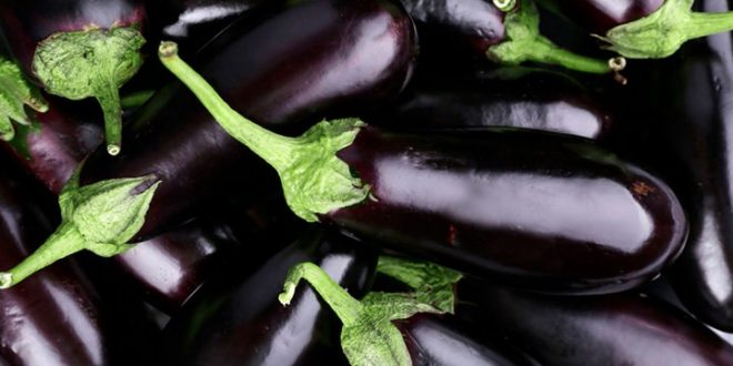 Maroc six ravageurs menacent exportations aubergines vers les USA