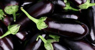 Exportations aubergines Maroc dans le top 15 mondial