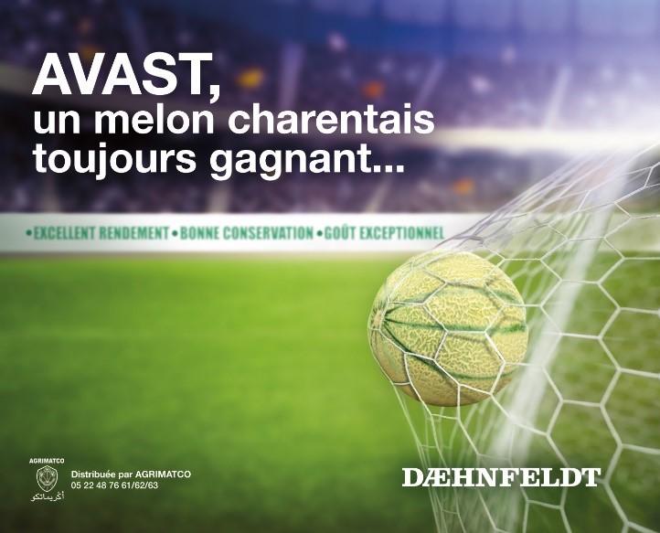 Melon Avast: Tenue et rendement en sous-serres et en plein champ