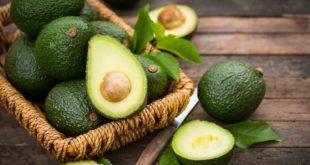 avocat sera le fruit tropical le plus vendu au monde en 2030