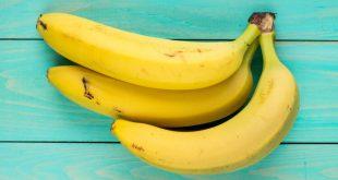 Des chercheurs créent une banane Cavendish résistante à la fusariose TR4