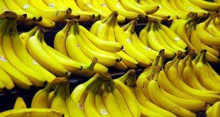 Le Maroc produit de plus en plus de bananes