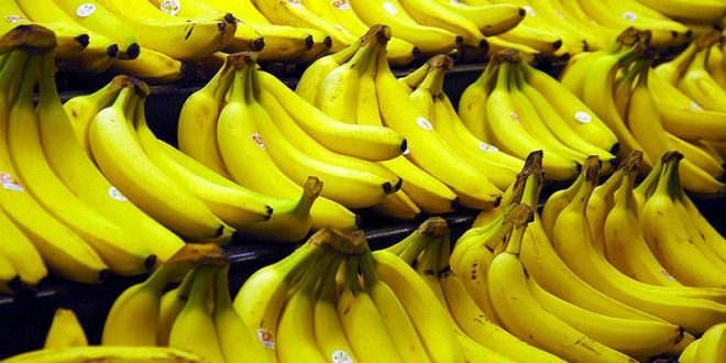 La production turque de bananes a augmenté de 32,8% en 2020