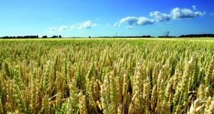 Les agriculteurs marocains craignent une mauvaise campagne agricole
