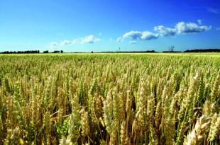 Bilan en chiffres de la campagne agricole 2014-2015