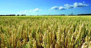 أخنوش: القطاع الزراعي المغربي يمر بسنة صعبة