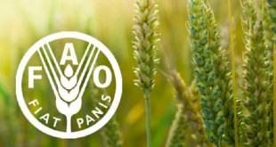 Bilan des projets menés par la FAO au Maroc