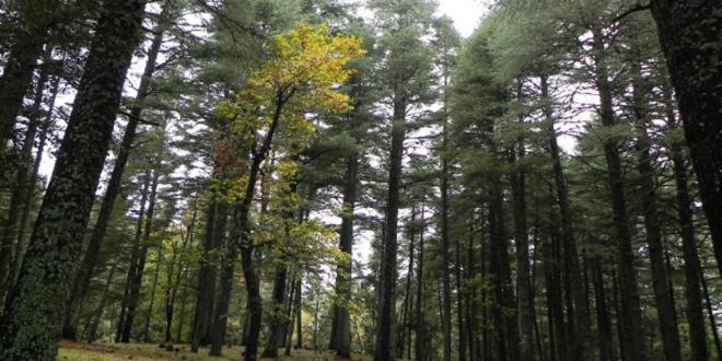 Maroc plantations forestières