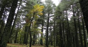 agroforesterie, un outil d'adaptation des systèmes de cultures