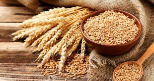 hausse des prix du blé dur