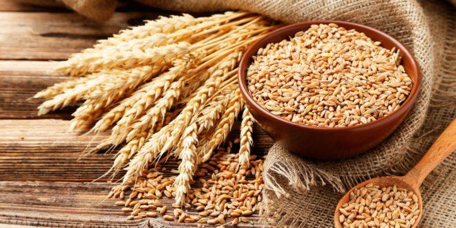 Panique mondiale : les prix du blé dur flambent