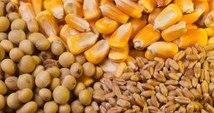 L'Ukraine termine 2019/20 avec des exportations records de céréales