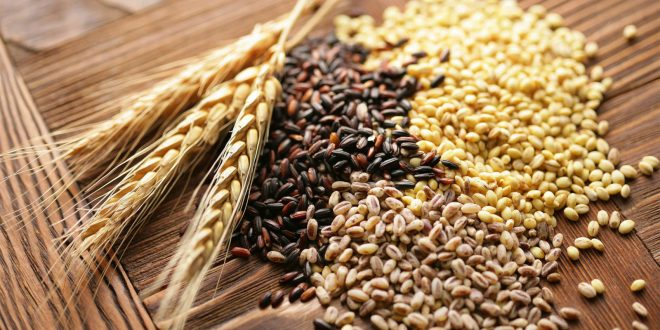 INRA présente ses nouvelles variétés de céréales à Fqih Ben Salah