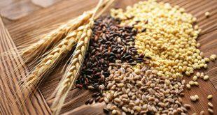 Maroc : des mesures pour promouvoir la production nationale de céréales