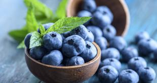 Les-bleuets-pourraient-améliorer-le-diabète-de-type-2-selon-une-étude