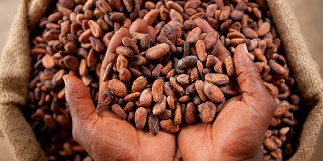 Côte ivoire commerçants de cacao disent stop à la domination des exportations par les multinationales