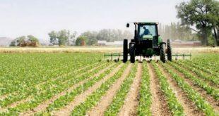 Maroc très bonne campagne agricole