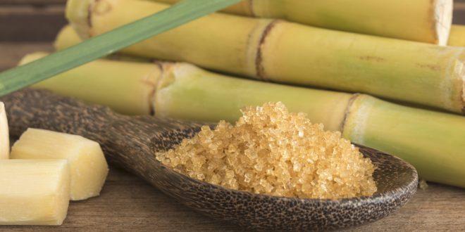 Campagne-sucrière-Bonne-production-en-canne-à-sucre-dans-le-Gharb