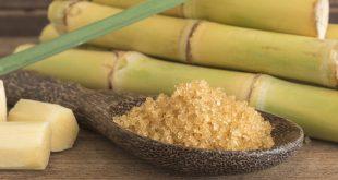 Maroc : diminution de la superficie réservée aux cultures sucrières