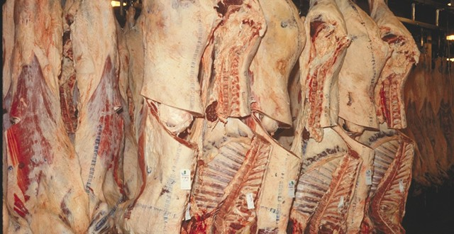 Afrique du Sud : 36% de têtes de bétail supplémentaires seront abattues