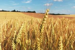 casablanca-settat-cerealiere