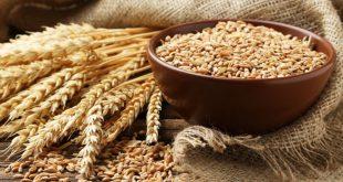 La production mondiale de céréales en 2021 augmentera pour la troisième année consécutive