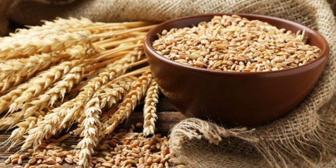 Maroc suspension des droits importation du blé tendre