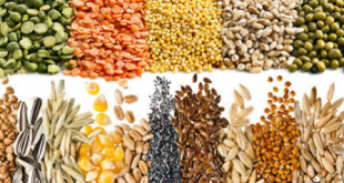 Intérêt des associations céréales-légumineuses