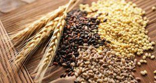 Campagne 2020/2021 : plus de soja au Brésil et plus de blé en Australie