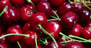 Les producteurs de cerises s'inquiètent de l'absence de traitement alternatif au diméthoate