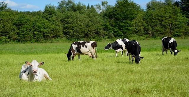 Un éleveur poursuivi pour avoir laissé mourir son bétail