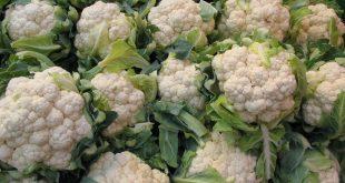 La-production-mondiale-de-chou-fleur-a-augmenté-de-3,7%