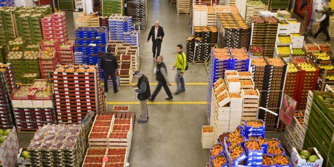 Maroc-Les-exportations-agricoles-en-Espagne-se-chiffrent-à-plus-de-1,6-MMDH
