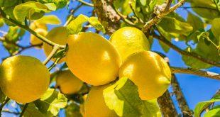 Covid-19-Hausse-de-250%-du-prix-des-citrons-en-Espagne