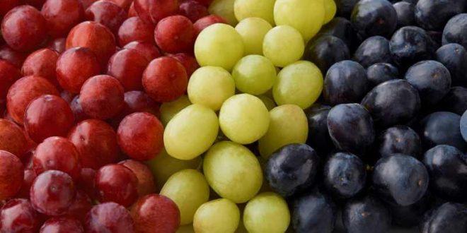 Aperçu du marché mondial des raisins de table