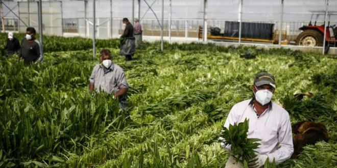 USA: La contamination au Covid-19 des travailleurs agricoles d'une serre fait polémique