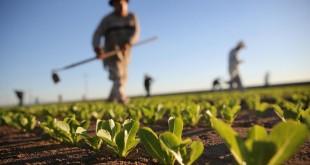 La croissance économique s'accélère grâce à l'agriculture