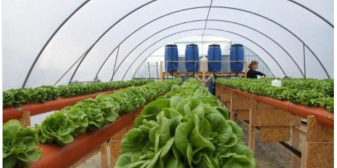 Nouvelle-production-agricole-avec-réutilisation-de-l-eau