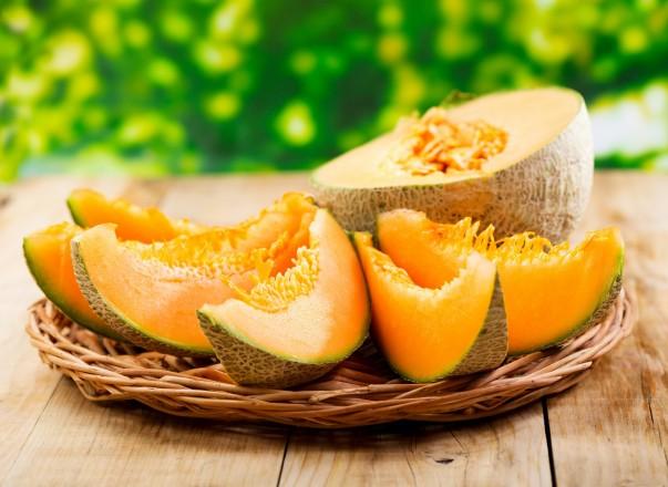 La culture du melon au maroc du semis la plantation - Culture du melon charentais ...