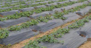 Souss-Massa création unité pour la valorisation des déchets agricoles