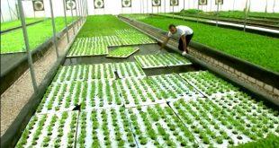 Égypte : les déchets de poisson servent à faire pousser les légumes