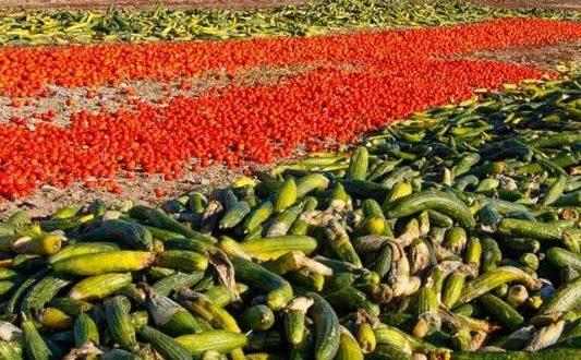 La concurrence marocaine engendre la destruction de tonnes de produits agricoles