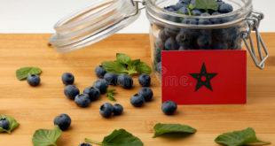 Myrtilles Maroc