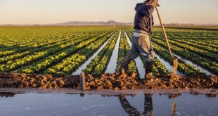 Khénifra : bon démarrage de la campagne agricole