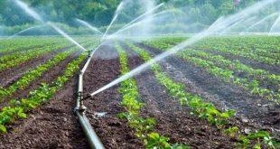 La province d'Errachidia renforce son agriculture irriguée