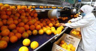 Égypte : Les exportations vers les pays arabes ont augmenté de 133 M$