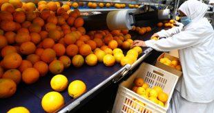 Japon autorise importation agrumes Égypte
