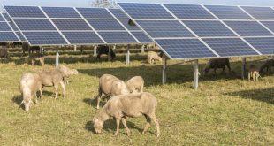 Les efforts du Maroc dans les énergies renouvelables récompensés